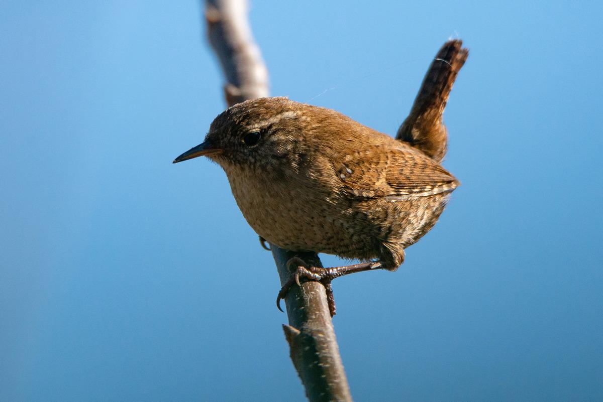 Фото птиц обитающих в беларуси