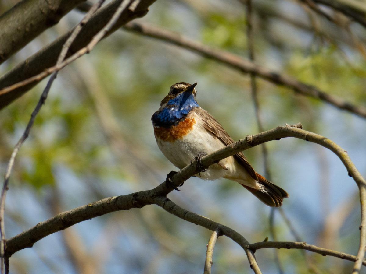 фото птиц обитающих в беларуси быть именно здесь