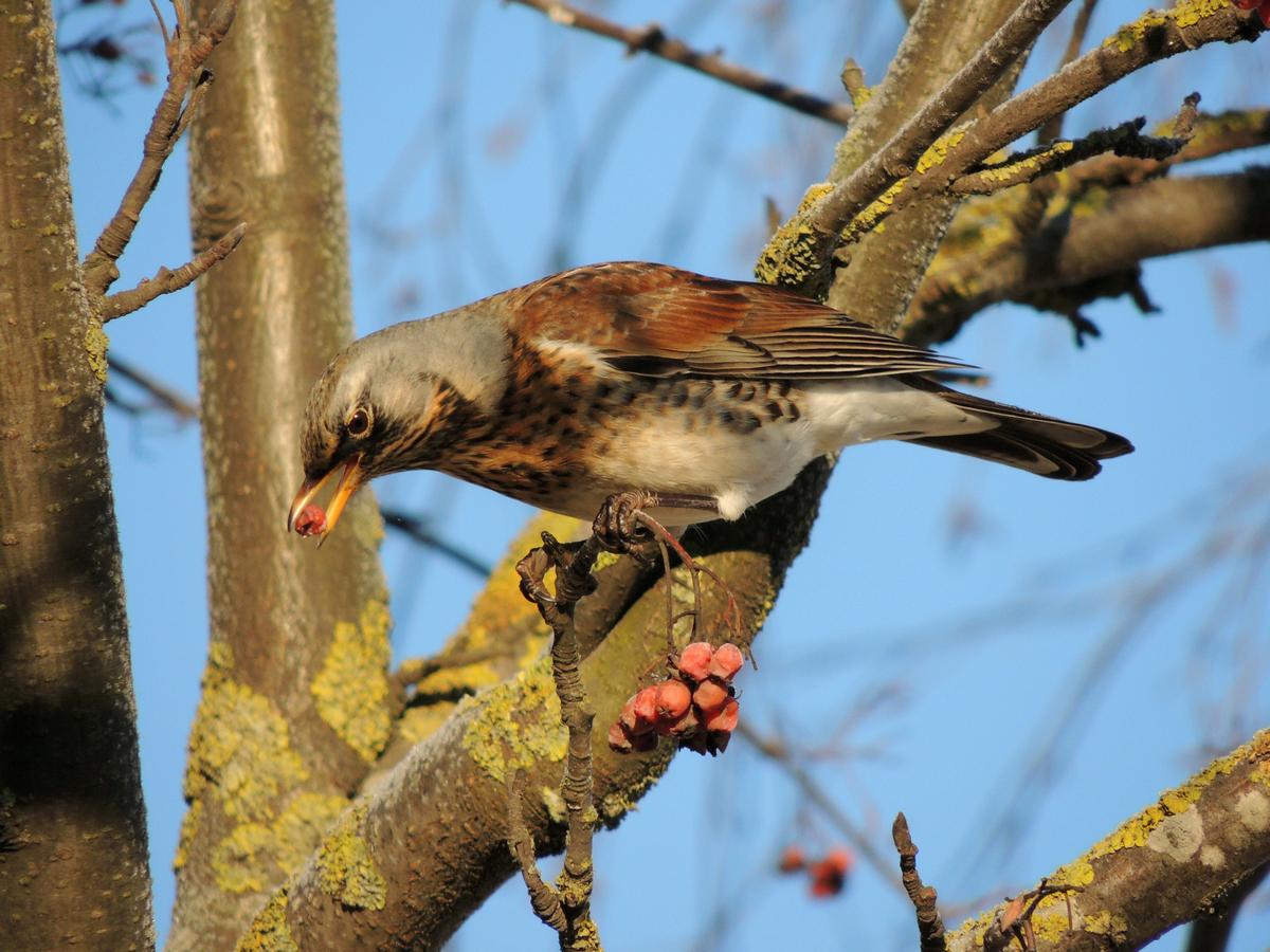 Картинки птиц обитающих в беларуси животных