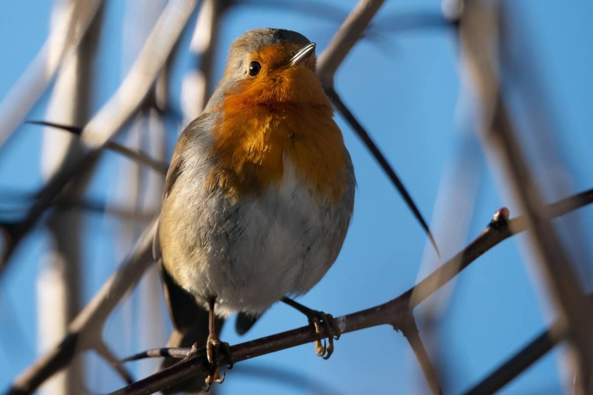 Птицы леса беларуси фото и описание