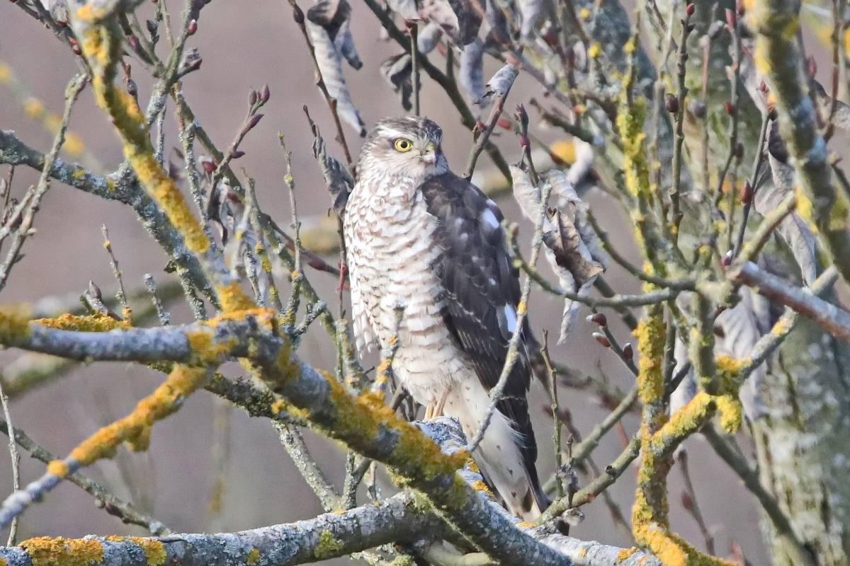 хищные птицы белоруссии фото себя других плакала