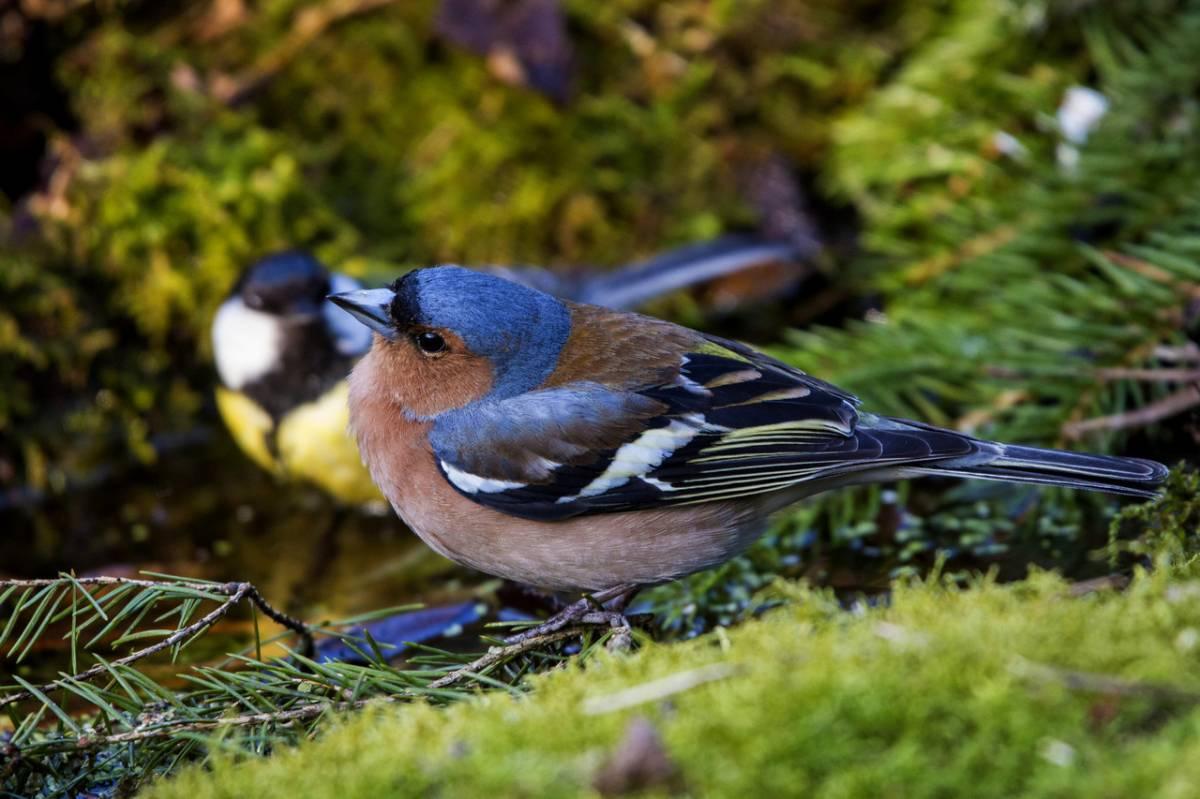 фото птиц обитающих в беларуси архитектор